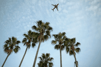 plane flying above palm trees_how to get over jet lag_proper