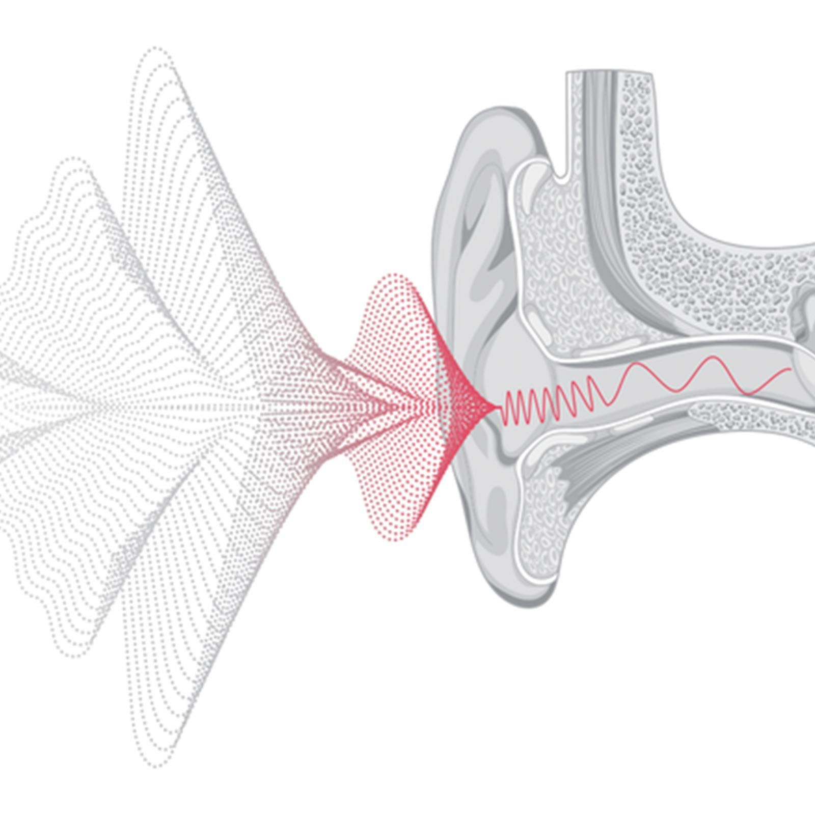 Illustrated cross-section of ear, demonstrating how Otoacoustic Emissions (OAEs) work