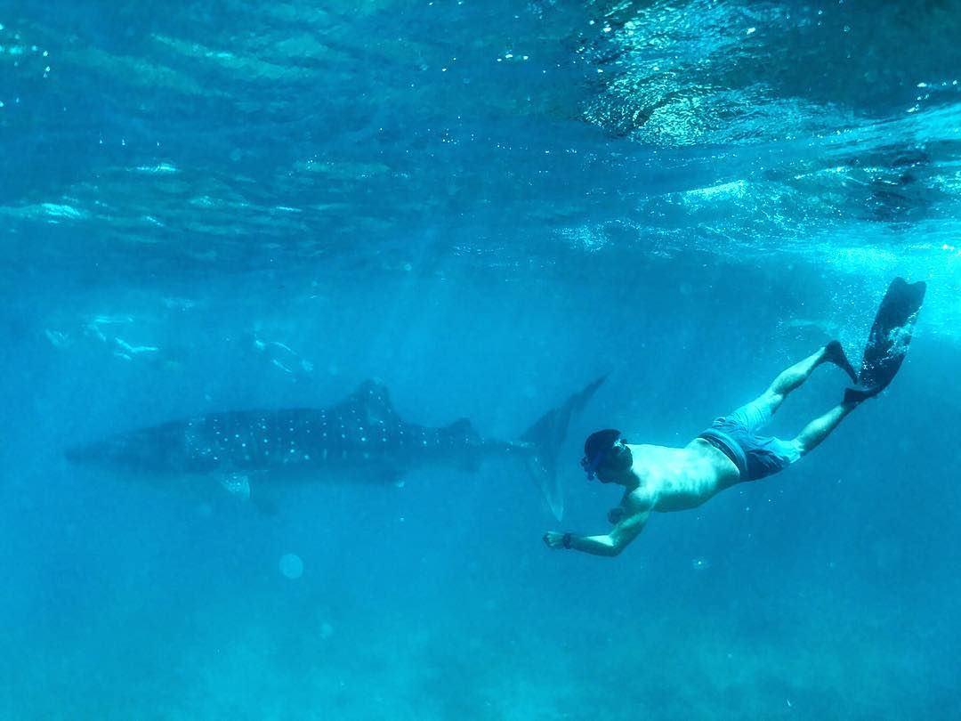 Man swimming in ocean with whale shark