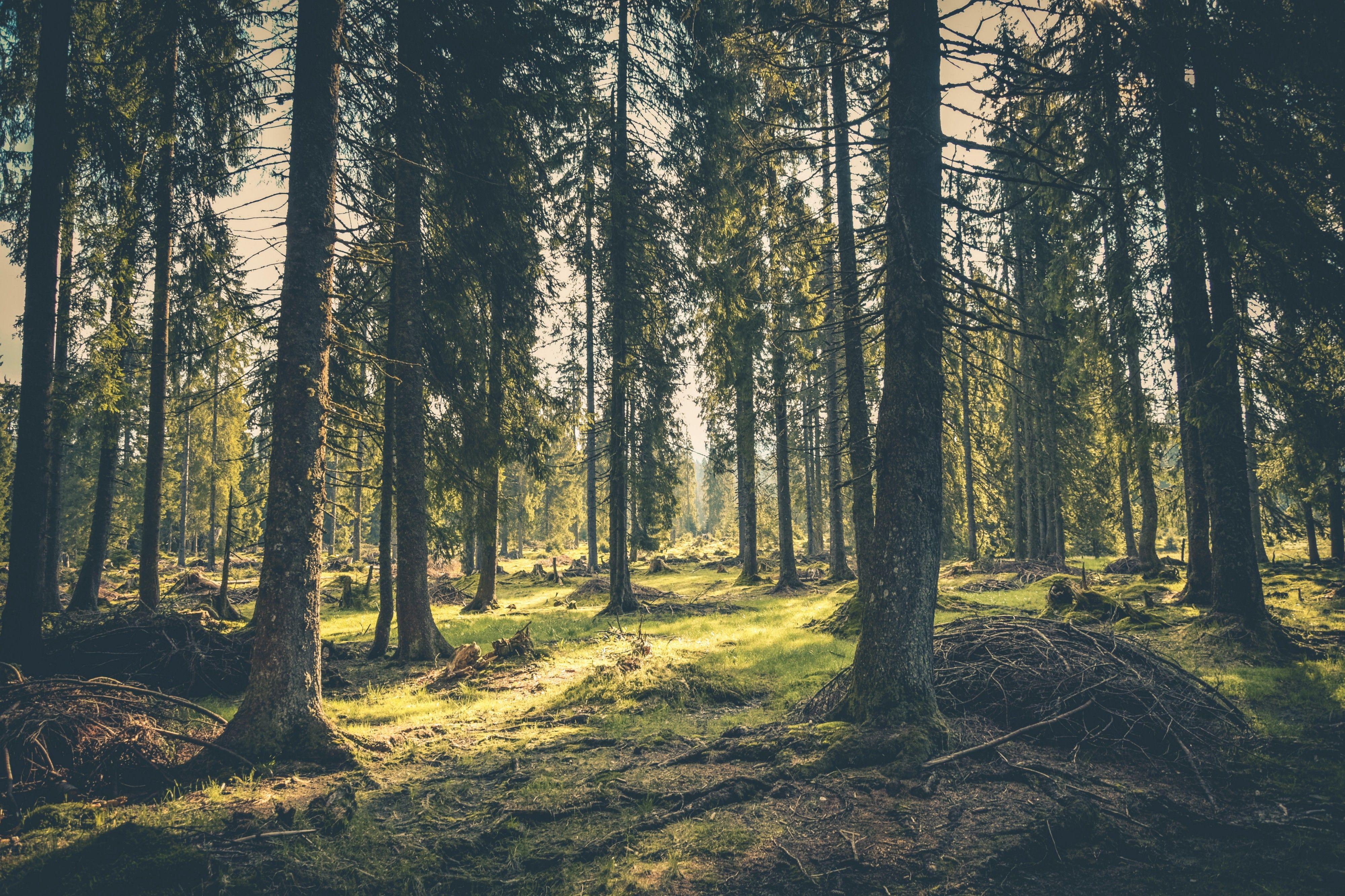 Bilde av skog