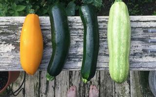 Fire typer squash