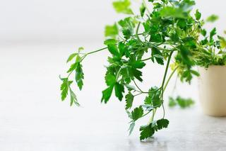 Grønn bladpersille i off-white plantepotte