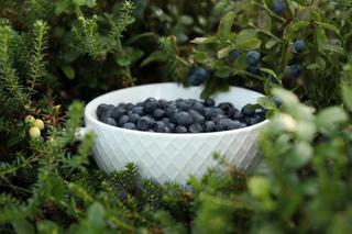 Blåbær i en skål i lyngen
