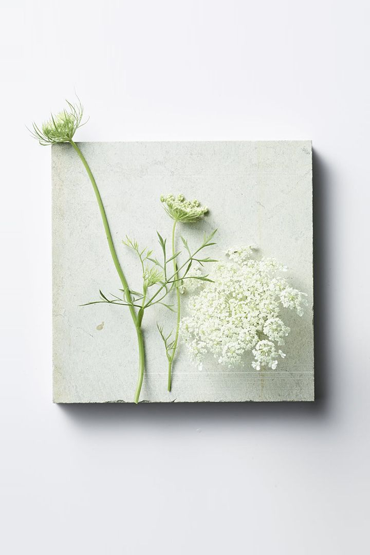 Yunjac still-life photograph of plant