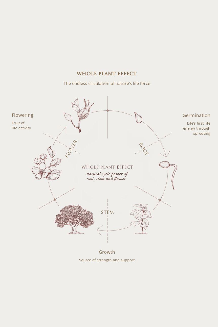 Yunjac whole plant effect diagram