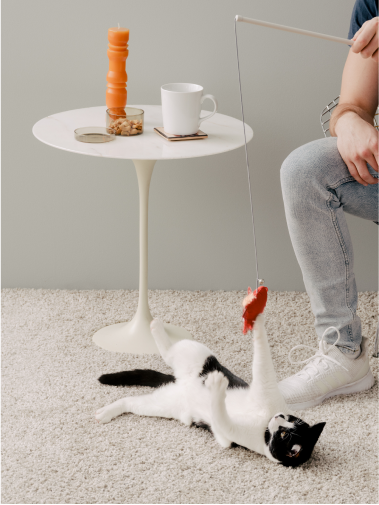 Cat lying on back playing with Cat Person cow catnip toy dangled by man above it