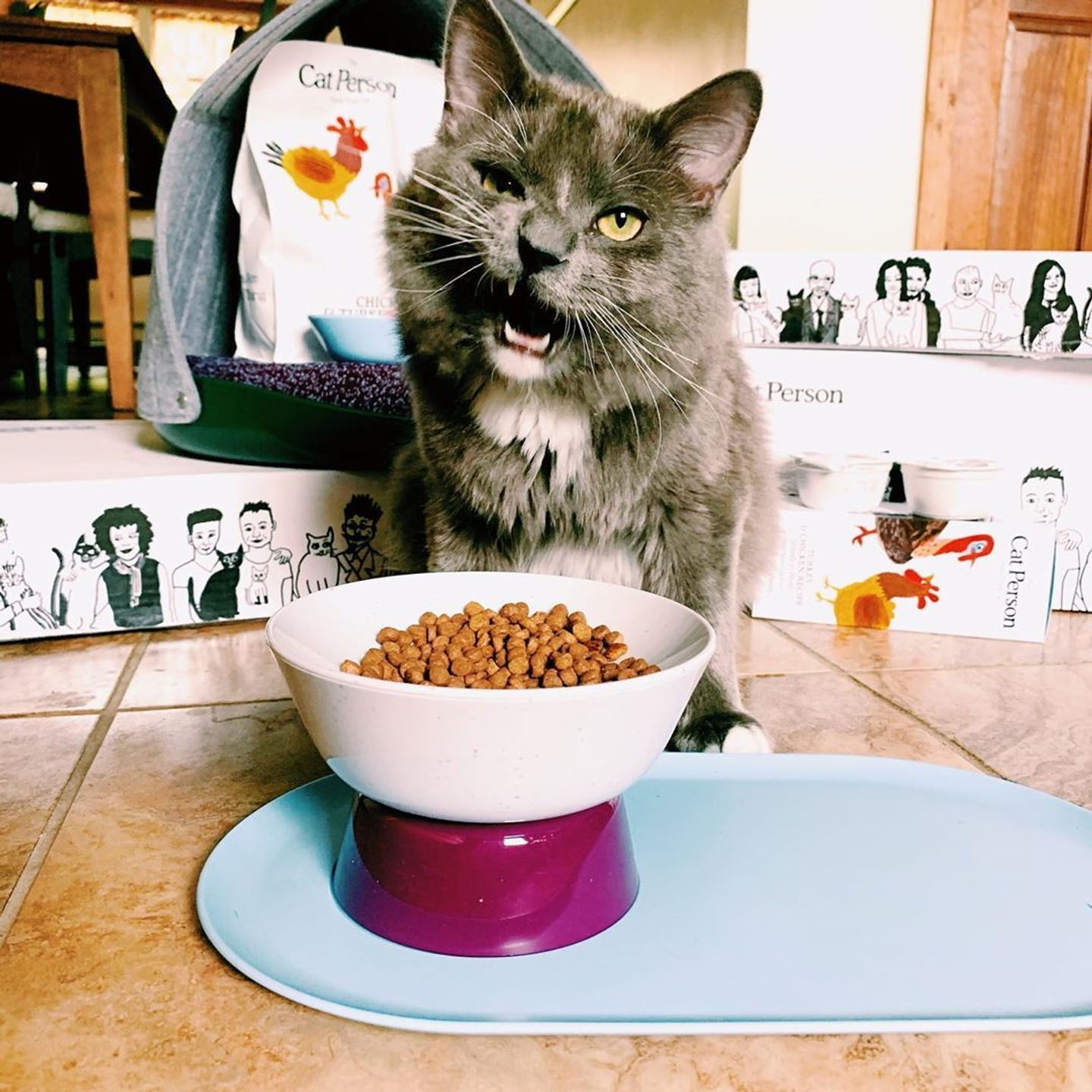 Grey cat eating Cat Person chicken & turkey dry food out of a Cat Person mesa bowl