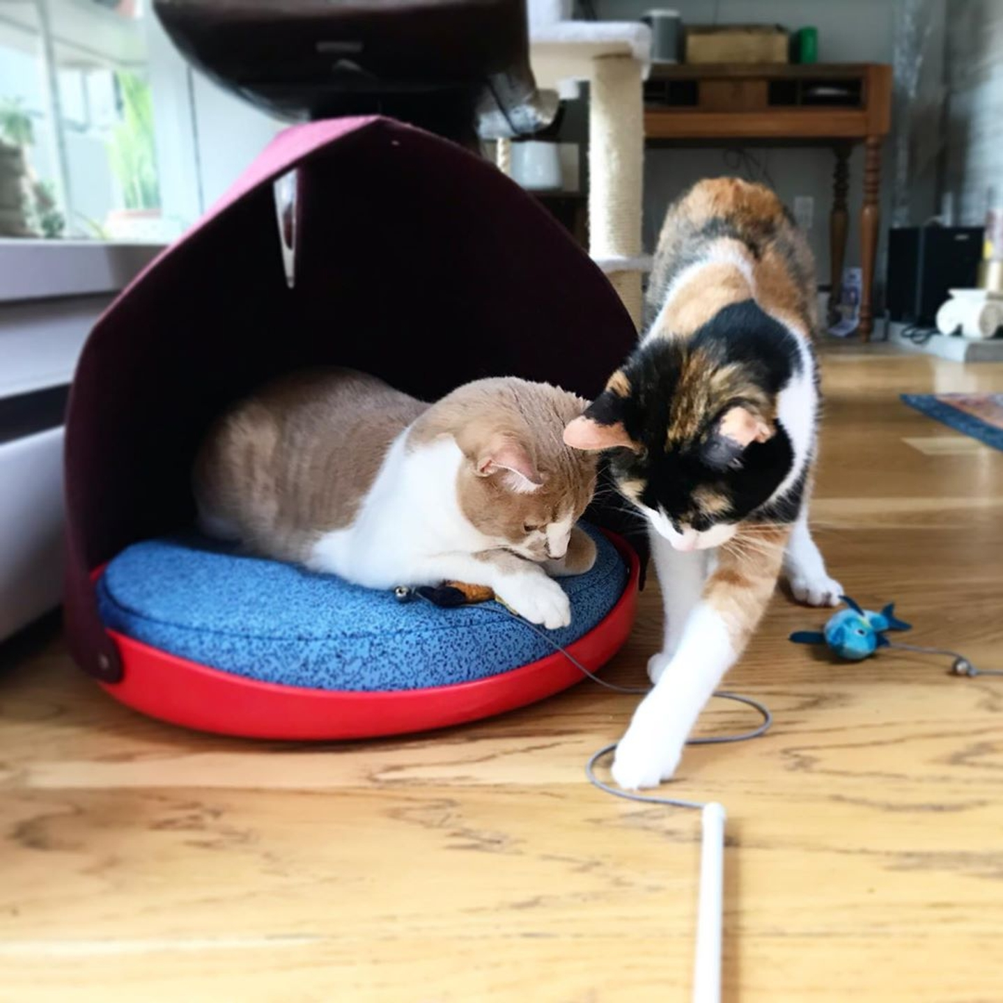 Two cats playing with Cat Person catnip toy