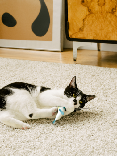 Black and white cat lying on white rug pulling playfully at Cat Person tuna catnip toy