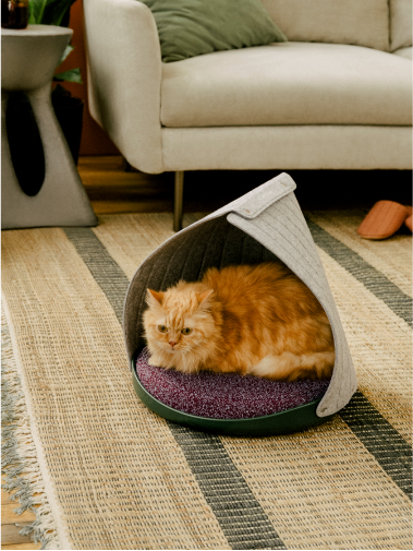Orange cat lying in Cat Person canopy bed in a living room