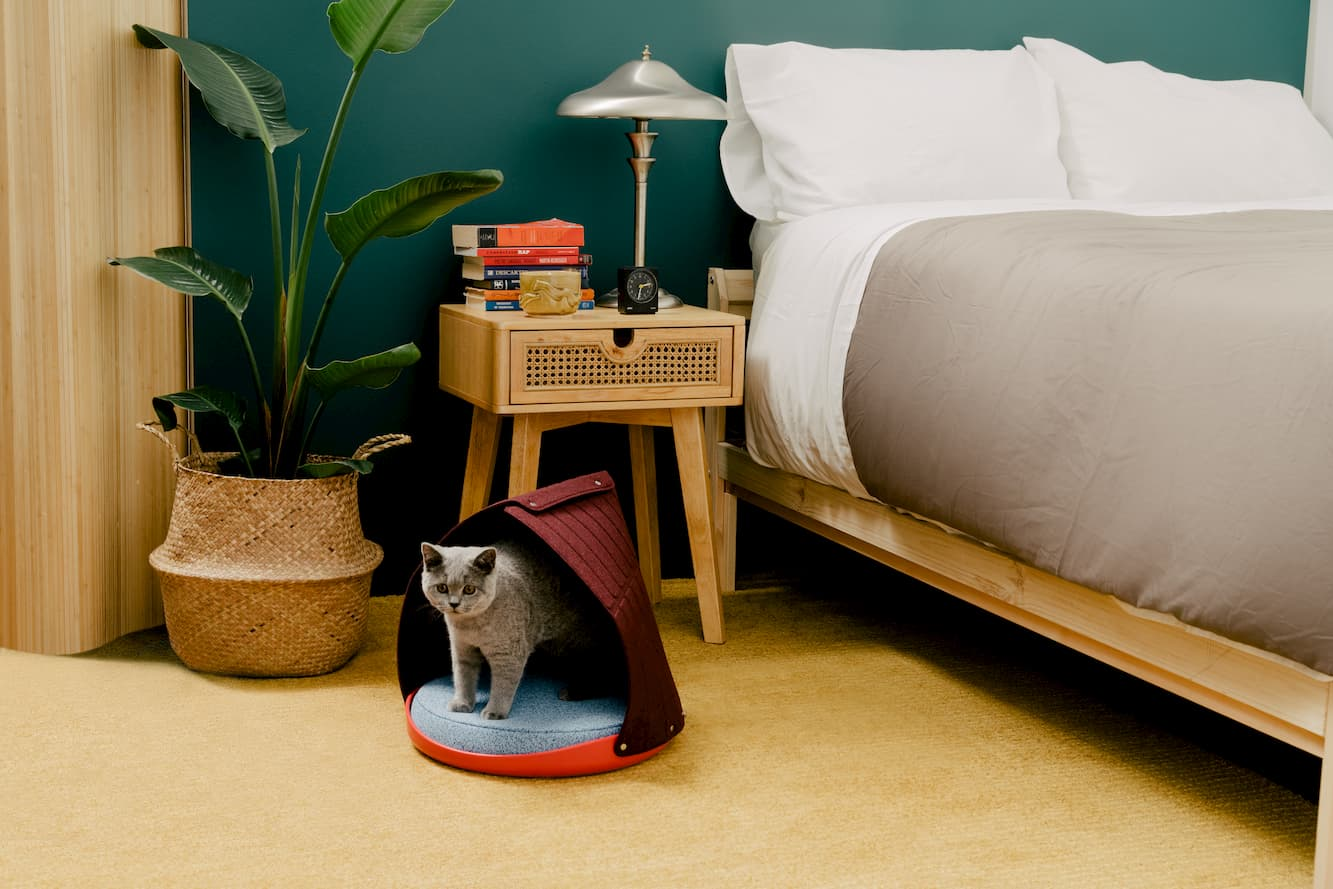 Grey British shorthair cat standing inside of Cat Person canopy bed in a bedroom
