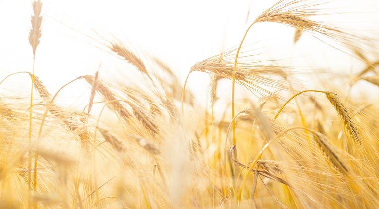 JOYSTICK®: un herbicide polyvalent