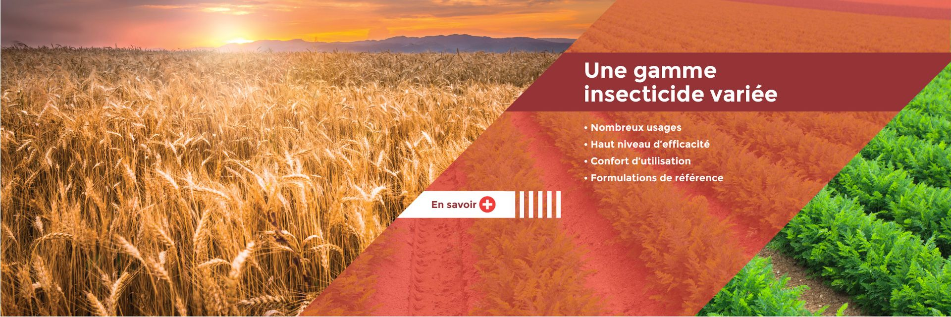 Insecticides polyvalents