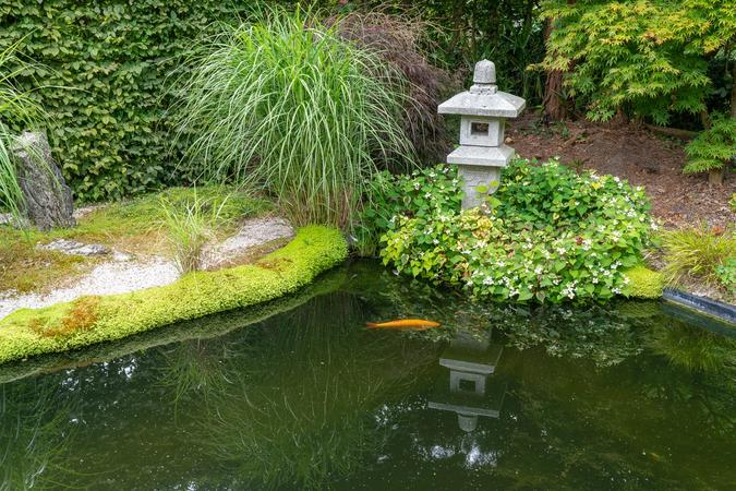 Japanese garden complete with Koi Carp