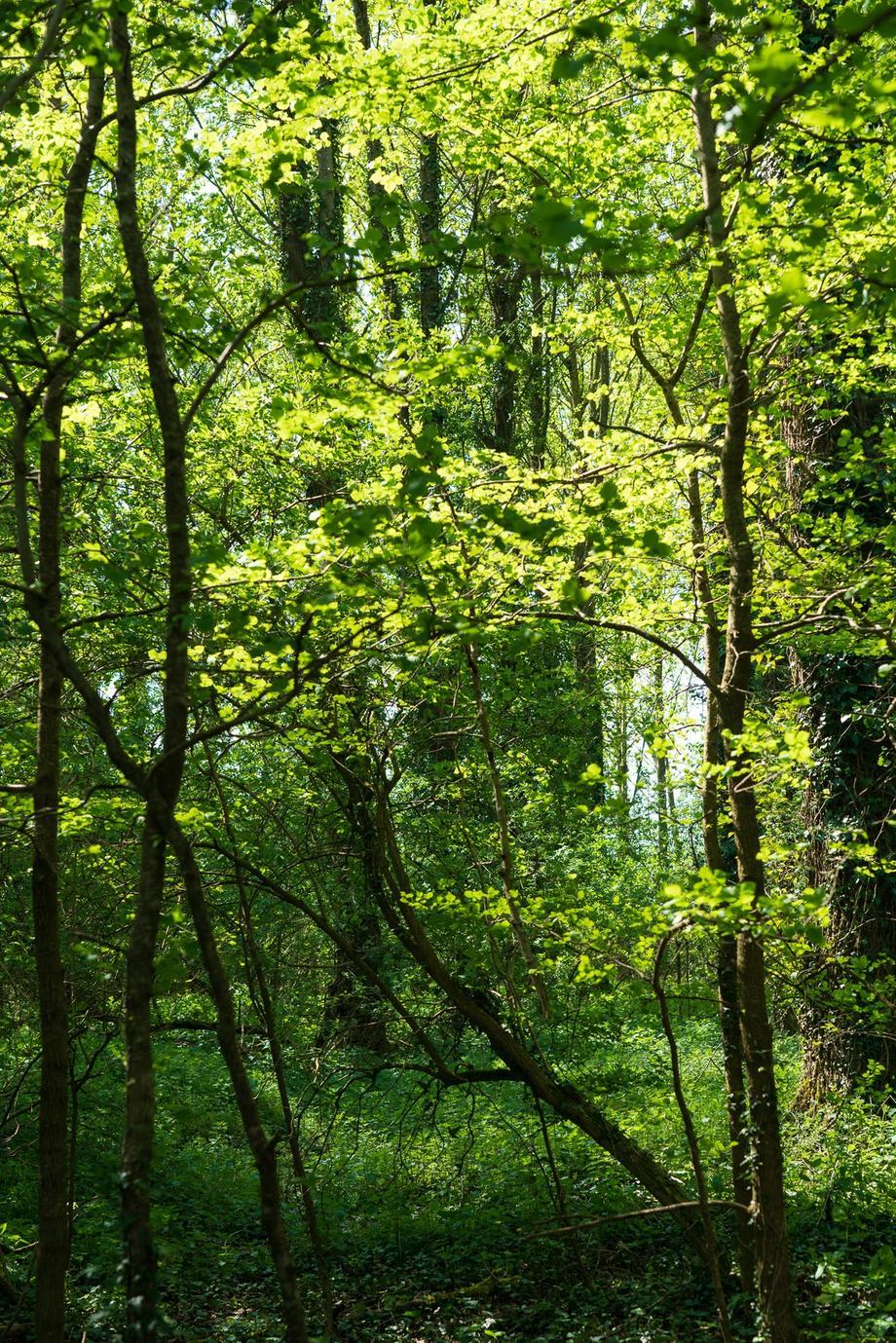 Backlit woodland