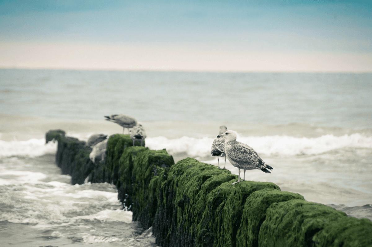 seagulls on a dock