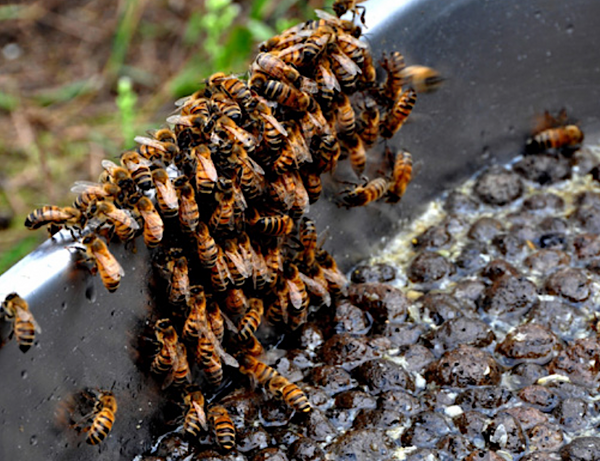 bees drinking from clinkaFILL substrate in water