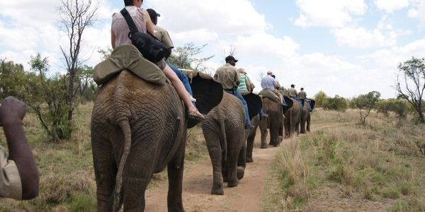 Adventures with Elephants Tour