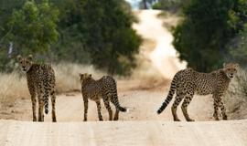 Kruger National Park Flagship Tour