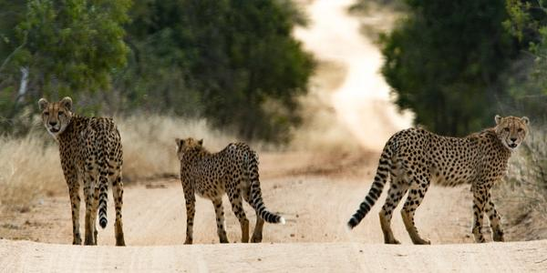 Kruger National Park Flagship Tour