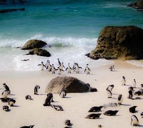 Boulders beach - Western Cape