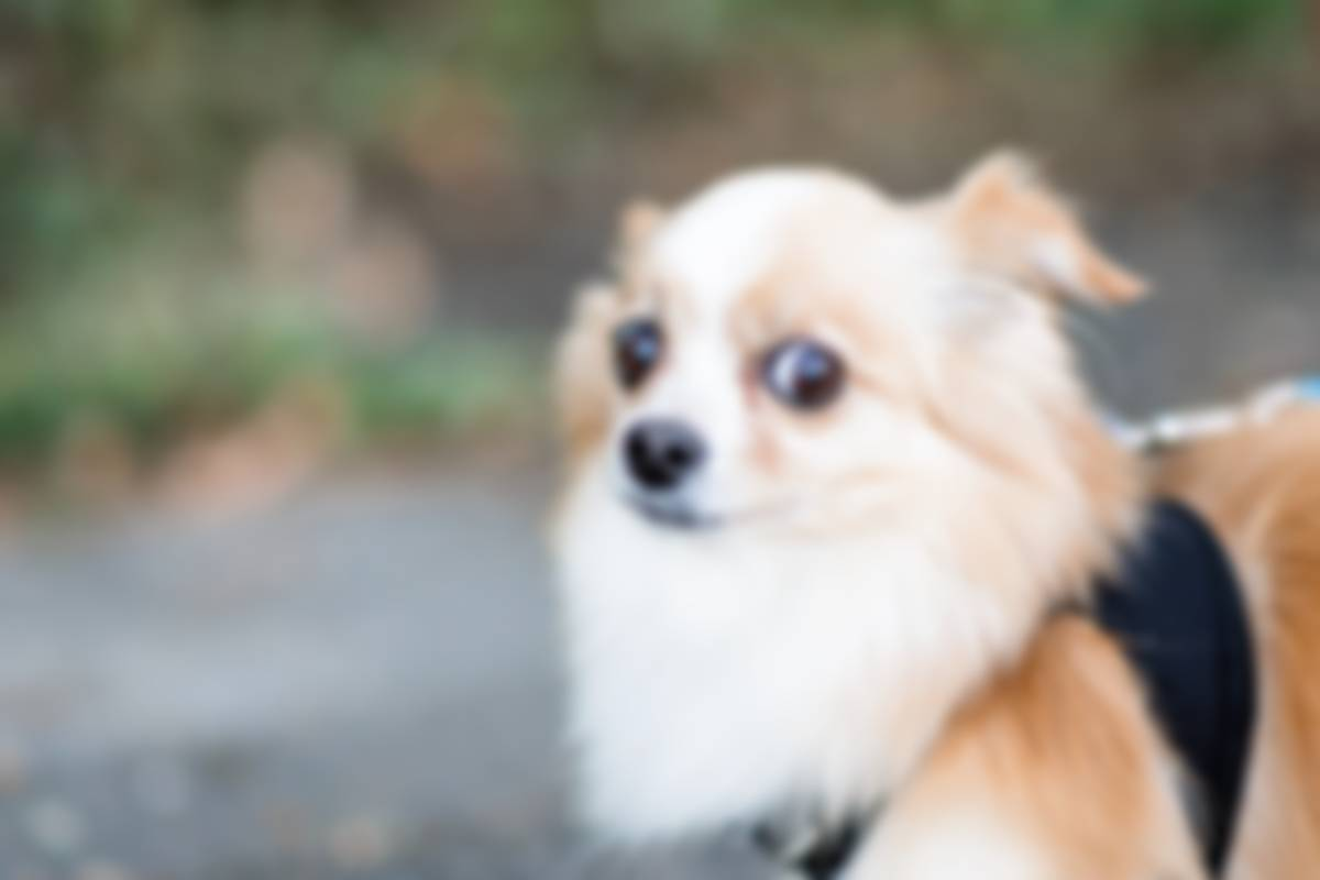 Small scared dog