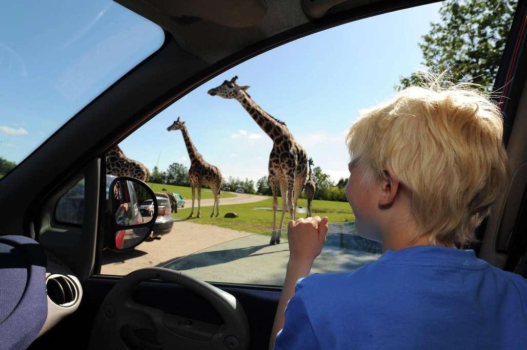 Givskud Zoo. Foto: Visit Denmark