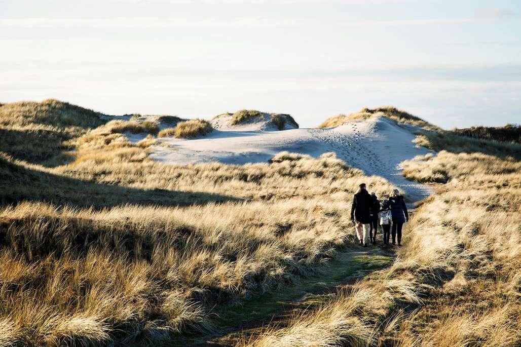 Eksotisk. Å vandre blant sanddynene vest på Jylland er ikke spesielt krevende, men en helt fantastisk opplevelsen. Foto: Visit Denmark