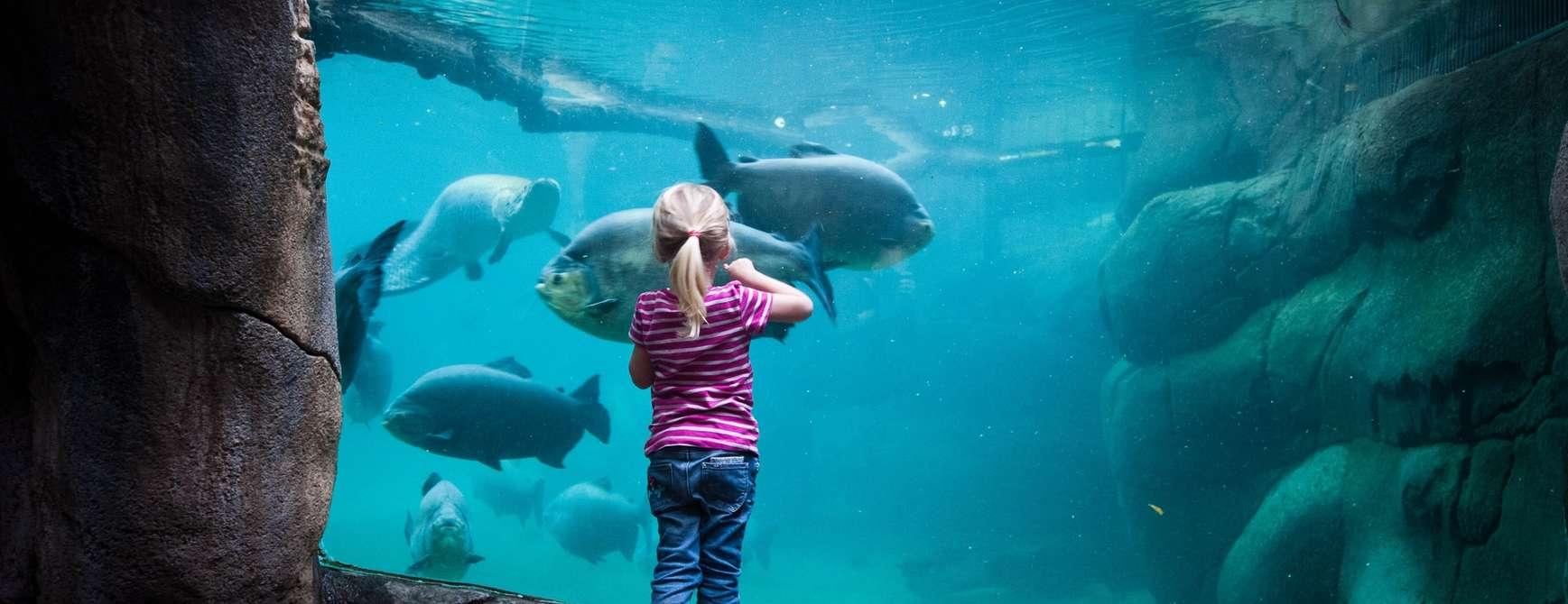 Jente som ser på tropiske fisk i akvarium i Randers Regnskov