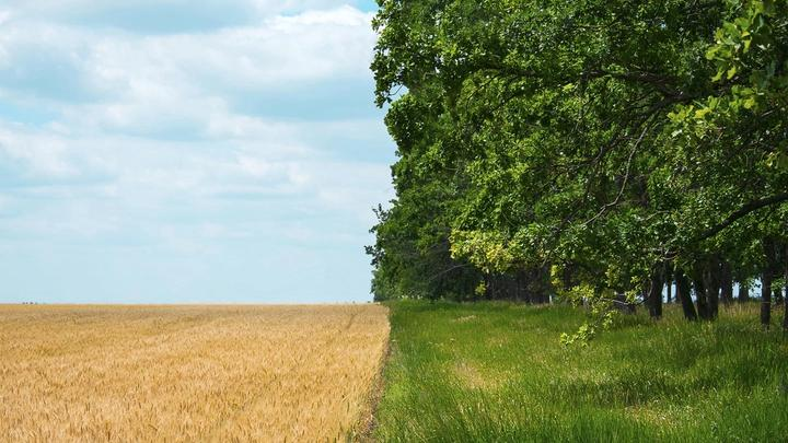Field of crops bordering grassland lined with trees.