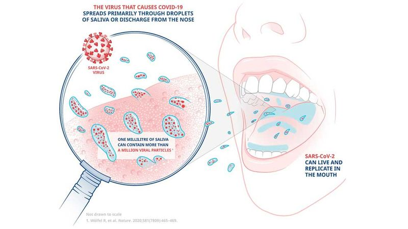 An illustration showing how the virus that causes Covid-19 spreads primarily through saliva or discharge from the nose
