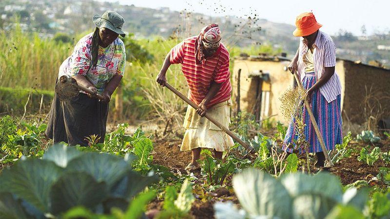 Women harvesting seasonal vegetables in a field