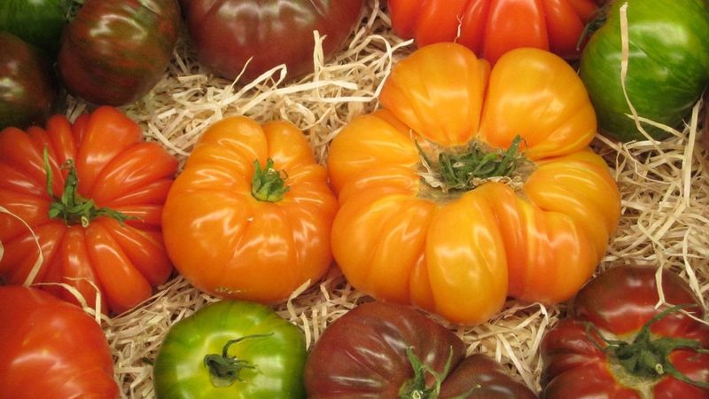 A selection of tomatos