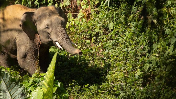 An elephant walking through a forest