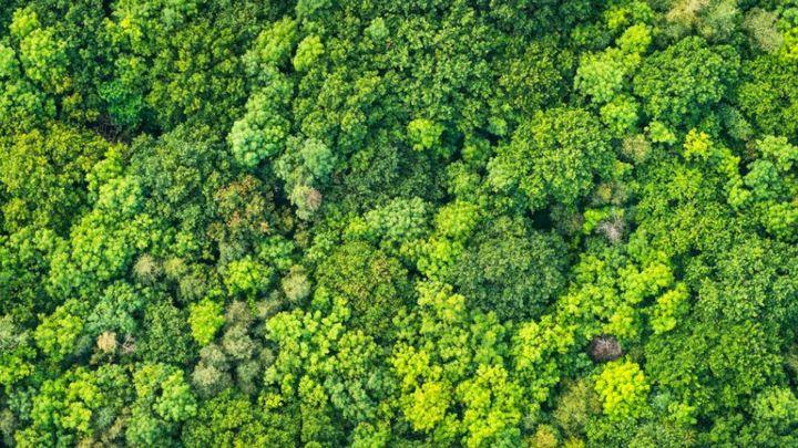 Együttműködés az erdőirtás megszüntetéséért.