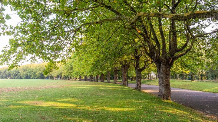 green park with short cut grass and trees lining a footpath