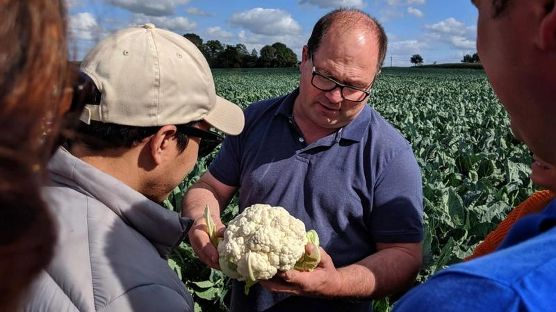 Two men in a field assess the quality of a cauliflower
