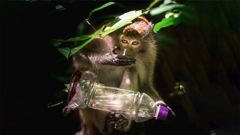 monkey with plastic bottle