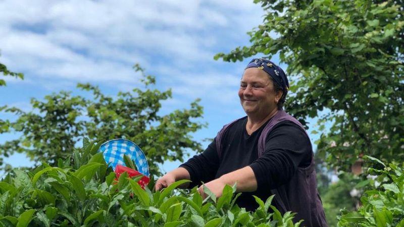 Yeşil çay tarlaları içinde kadın bir çiftçi