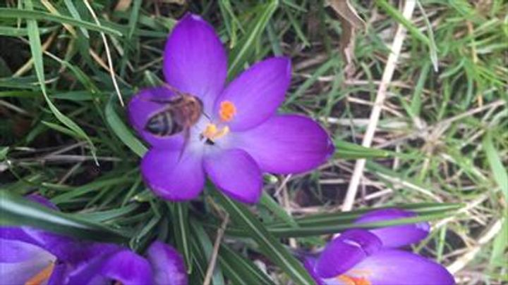 bee and flower 2