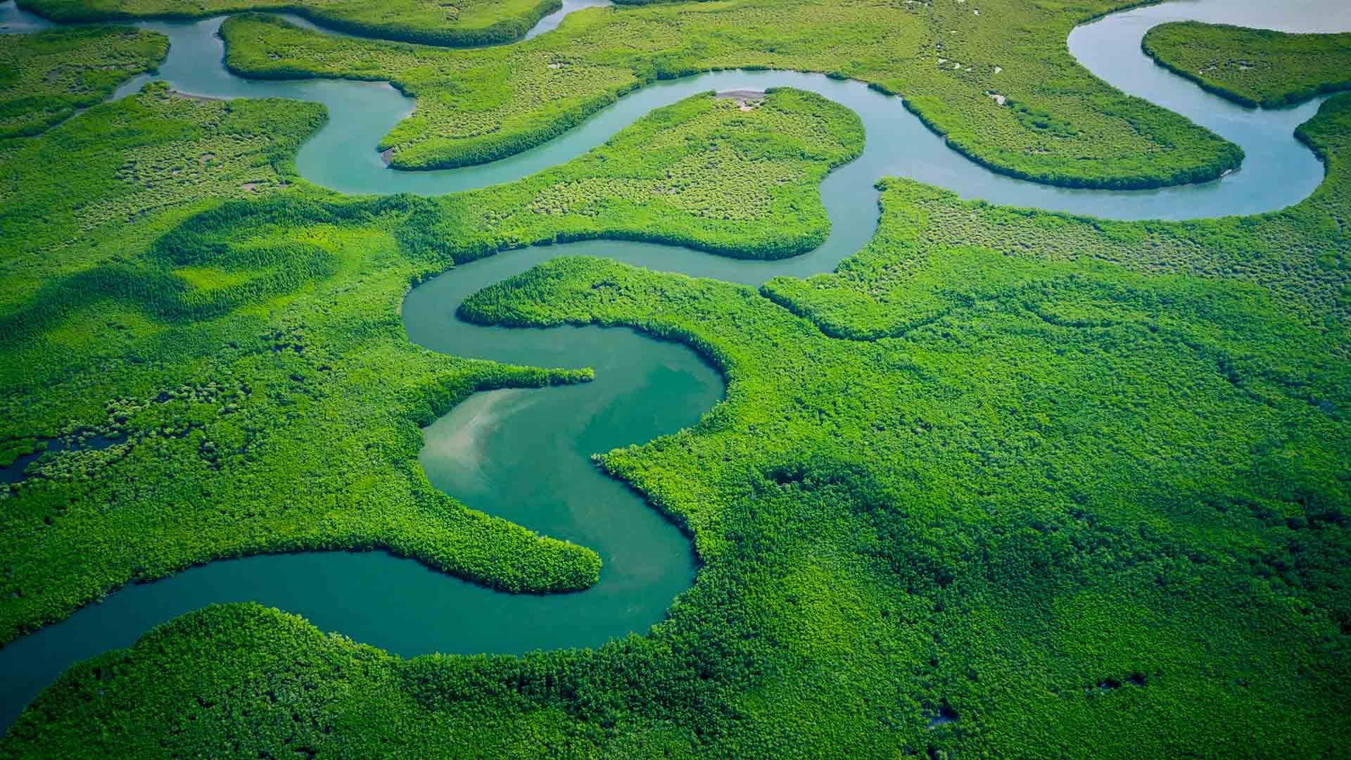 Aerial view of river flowing through rainforest