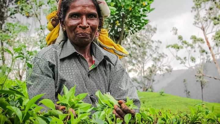 Lady with tea leaves