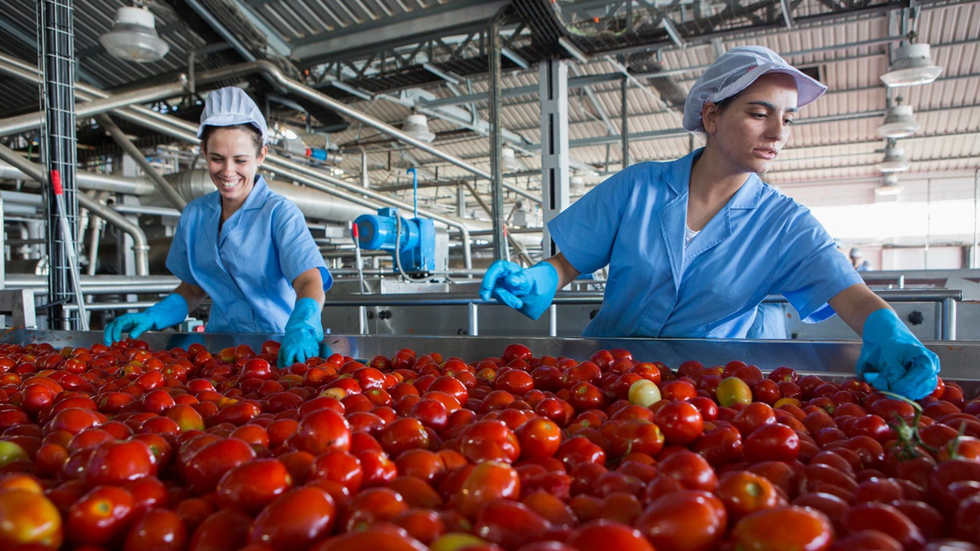 Two women in work overalls sort tomatoes on a factory production line