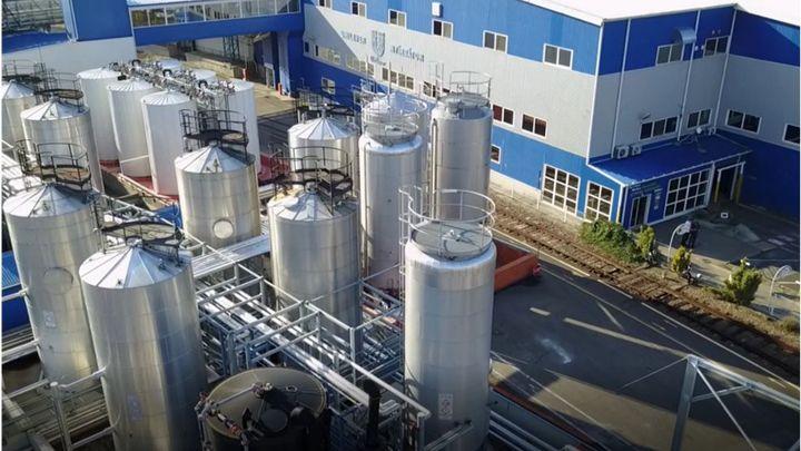domestos factory