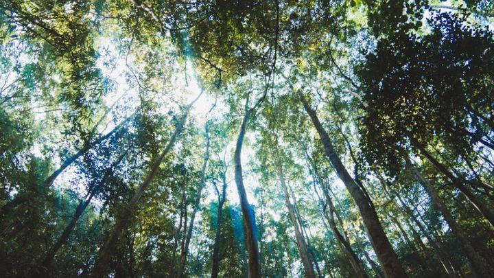 PHI-trees-990x557