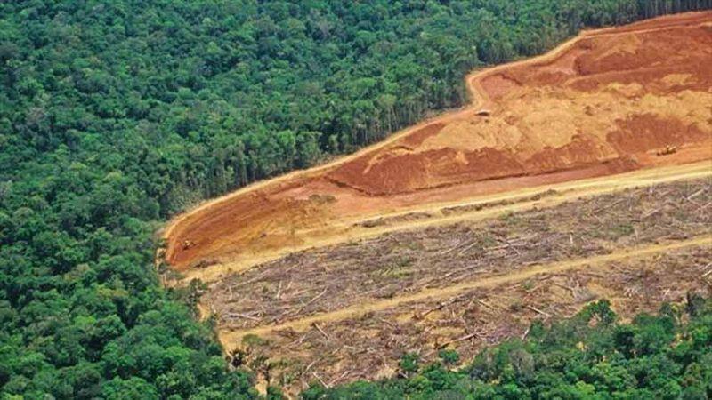 Deforestation scene