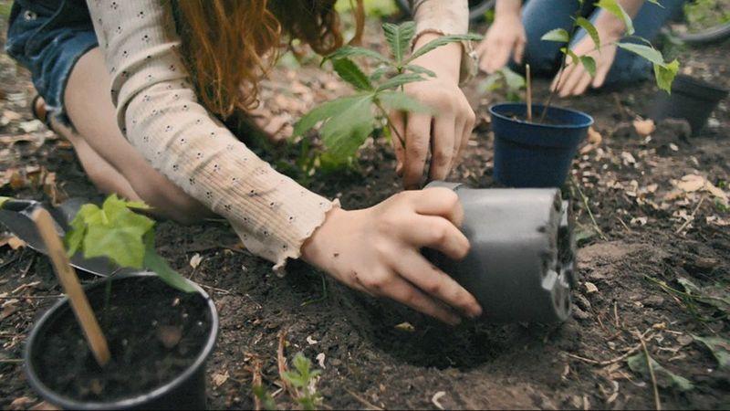 Children planting seedlings.