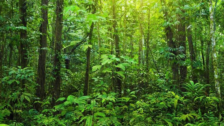 Trees and foliage in a tropical rainforest. Unilever has committed to achieving a deforestation-free supply chain by 2023.