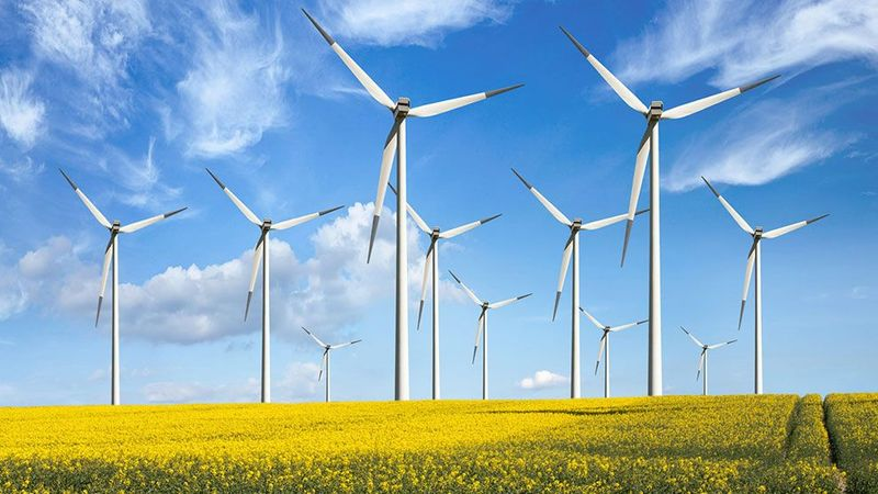 Wind turbines in a yellow field on a sunny day