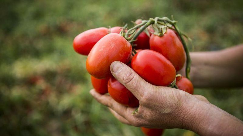 Unilever apoya al pequeño agricultor.